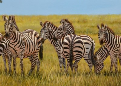 Stripes on the Maasai Mara plains