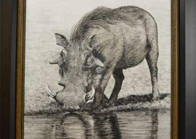 Warthog at the waterhole