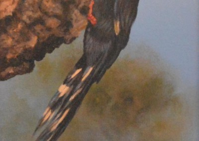Redbilled woodhoopoe