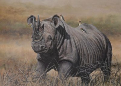 Africa's black rhino-our heritage & hope