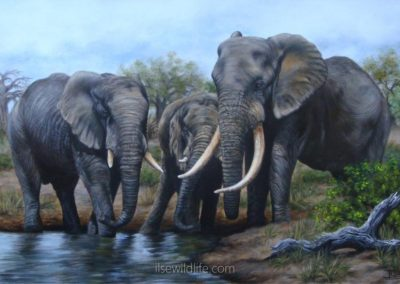Elephant family at the waterhole