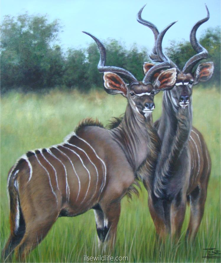 Wildlife Paintings By Ilse De